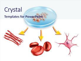 5000 Stem Cell Powerpoint Templates W Stem Cell Themed Backgrounds
