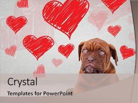 PPT layouts having bordeaux - puppy looking up to heart background and a light gray colored foreground.