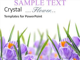 Theme featuring purple flowers - flower background and a white colored foreground.