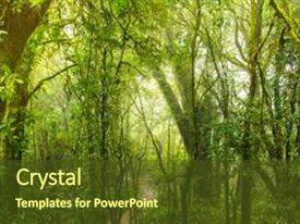 5000 rainforest powerpoint templates w rainforest themed backgrounds ppt theme consisting of in the mist foggy background and a tawny brown toneelgroepblik Image collections