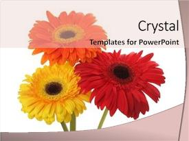 Beautiful slide set featuring red and yellow gerbera flower backdrop and a lemonade colored foreground
