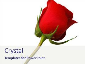 Beautiful slides featuring red rose isolated backdrop and a sky blue colored foreground.