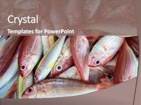 Presentation theme with red tropical fishes background and a gray colored foreground.
