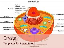 4000 anatomy physiology powerpoint templates w anatomy physiology cool new ppt theme with nucleus ribosome anatomical figure science education backdrop and a lemonade toneelgroepblik Images
