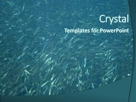 Beautiful presentation theme featuring sardines colony in ocean massive backdrop and a ocean colored foreground.