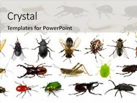 Audience pleasing PPT theme consisting of set of insects on white backdrop and a light gray colored foreground.