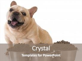 Beautiful slide deck featuring several bowls of dog food backdrop and a gray colored foreground.