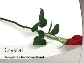 Presentation with single red rose on white background and a white colored foreground