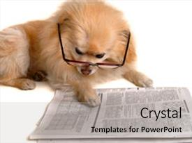 Audience pleasing PPT theme consisting of smart dog reading the newspaper backdrop and a light gray colored foreground.