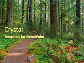 Colorful theme enhanced with sol duc rainforest at olympic backdrop and a tawny brown colored foreground.