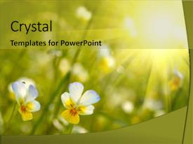 PPT theme having spring flowers background background and a gold colored foreground.