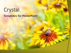 PPT layouts having spring flowers background background and a blonde colored foreground.