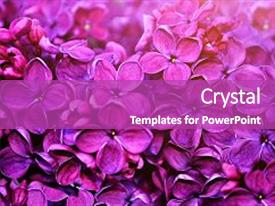 Slide deck having botanical - spring flowers - blooming lilac background and a purple colored foreground.