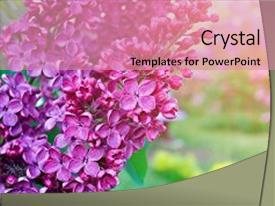 Beautiful PPT layouts featuring spring flowers - spring flower background backdrop and a coral colored foreground.