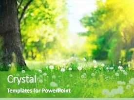 Beautiful theme featuring spring nature scene beautiful landscape backdrop and a shamrock green colored foreground