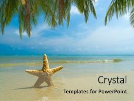 Slide deck enhanced with starfish on the tropical beach background and a mint green colored foreground.