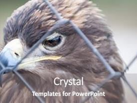 Cool new presentation theme with steppe eagle behind bars close backdrop and a gray colored foreground.