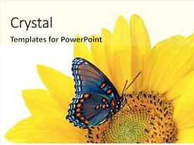 Cool new theme with sunflower and blue butterfly backdrop and a blonde colored foreground
