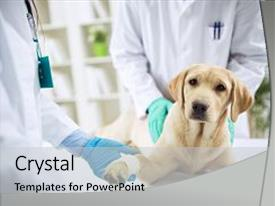 5000 veterinary powerpoint templates w veterinary themed backgrounds colorful presentation theme enhanced with surgeon treating dog in surgery backdrop and a light gray colored toneelgroepblik Choice Image