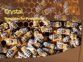 PPT theme having swarm - macro shot of bees swarming background and a tawny brown colored foreground
