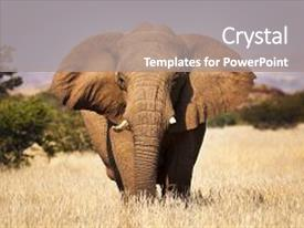 Audience pleasing slide set consisting of africa - travel - elephant backdrop and a gray colored foreground.