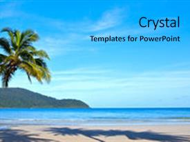 Beautiful theme featuring tropical beach with palms backdrop and a light gray colored foreground.