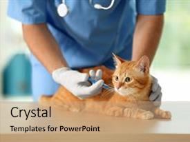 5000 vet powerpoint templates w vet themed backgrounds amazing ppt layouts having vaccine erinarian doctor vaccinating cat backdrop and a toneelgroepblik Gallery