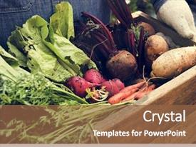 Cool new PPT theme with vegetables - adult farmer man holding fresh backdrop and a tawny brown colored foreground