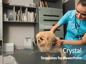 5000 vet powerpoint templates w vet themed backgrounds amazing presentation theme having a clinic dog examination backdrop and a gray colored foreground toneelgroepblik Choice Image
