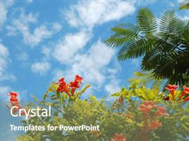 Audience pleasing slides consisting of view of nice tropical orange flower and palm tree leaf against a blue sky backdrop and a gray colored foreground.