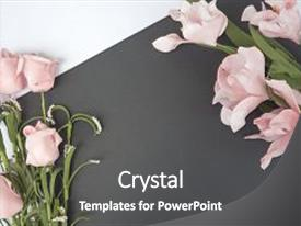 Colorful PPT layouts enhanced with roses - view with white and black backdrop and a dark gray colored foreground.