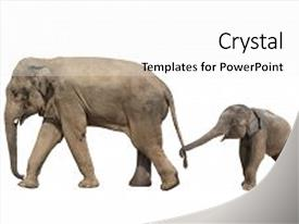 powerpoint template walking family of elephant mom and baby