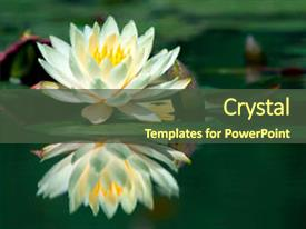 Presentation theme enhanced with water-lily and its reflection background and a tawny brown colored foreground.