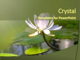 Colorful slide deck enhanced with water lily flower backdrop and a tawny brown colored foreground.