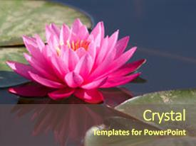 Presentation featuring water lily in a water background and a tawny brown colored foreground.