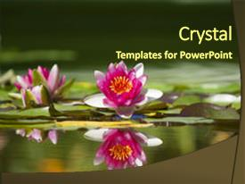Cool new slide deck with water lily - pink beautiful waterlily in green backdrop and a tawny brown colored foreground.