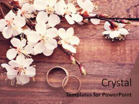 Colorful PPT layouts enhanced with wedding rings flowering branch backdrop and a coral colored foreground.