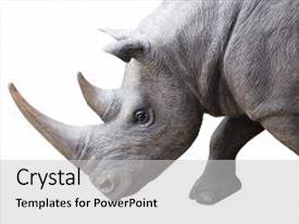 5000 rhinoceros powerpoint templates w rhinoceros themed backgrounds