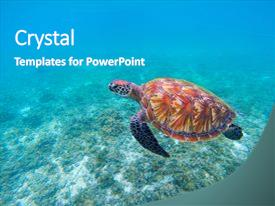 Cool New PPT Theme With Wild Sea Turtle In Blue Ocean Closeup Green
