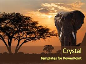 Africa powerpoint templates ppt themes with africa backgrounds theme having africa wildlife and wilderness beautiful nature background and a tawny brown colored foreground toneelgroepblik Choice Image