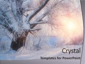 Presentation featuring winter landscape-winter tree background and a light gray colored foreground.