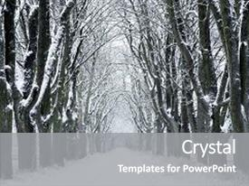 Beautiful PPT layouts featuring winter nature winter forest landscape in early winter morning winter nature view with snowy winter forest - winter landscape snow on tree backdrop and a gray colored foreground.