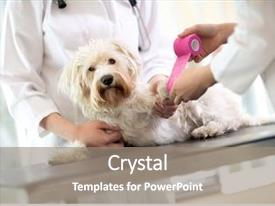 Slide deck having wound care - sad little maltese dog background and a gray colored foreground