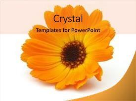 Slides having yellow orange - marigold on a white background background and a gold colored foreground