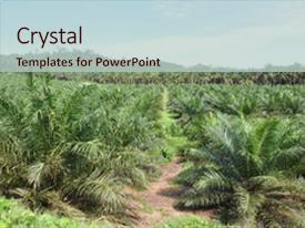 Top Palm Oil PowerPoint Templates, Backgrounds, Slides and PPT Themes