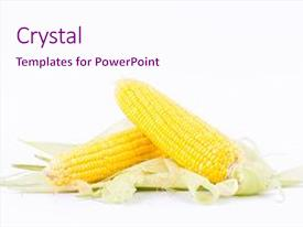 5000 corn cobs powerpoint templates w corn cobs themed backgrounds
