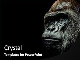 5000 zoology powerpoint templates w zoology themed backgrounds presentation theme with zoology portrait of a gorilla isolated background and a black colored foreground toneelgroepblik Images