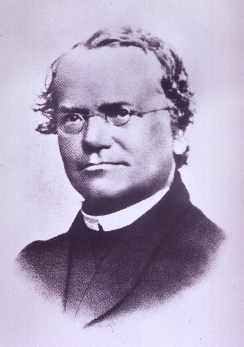 Gregor Mendel Genius Geneticist