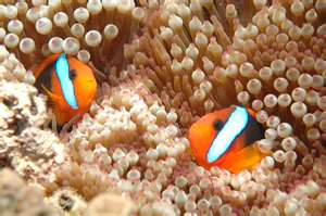 Great Barrier Reef  The Worlds Largest Living Organism