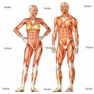 peoplequiz - trivia quiz - human body systems & functions, Muscles